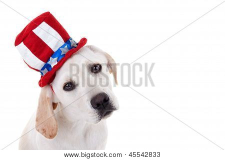 Patriotic Puppy Dog