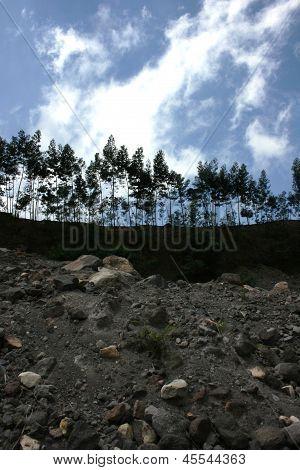 vegetation on the slopes of Mount Merapi