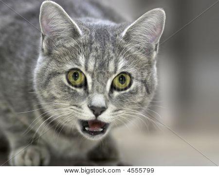 freundliche Katzenartige