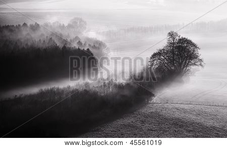 Black And White Mist Landscape