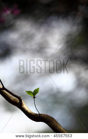Só duas folhas em uma árvore