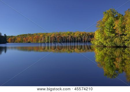 Colorful Foliage And Blue Sky