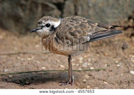 Cute Shore Bird