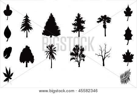 Silhouetted Trees And Leaves