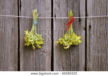 Medizinische Schlüsselblume (Primula Veris) Blumen Haufen auf Holzwand