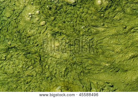 Green Slime With Small Bubbles