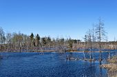 stock photo of boggy  - View of flooded trees during the spring flood - JPG