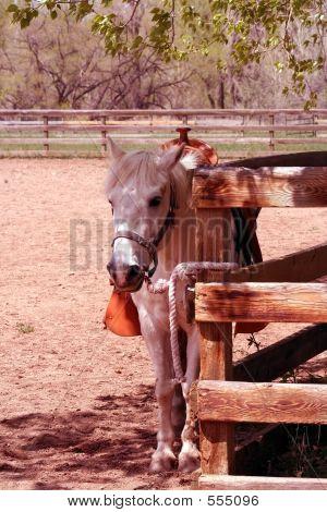 Patient Pony