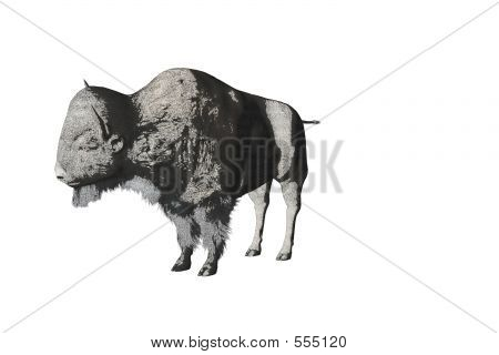 Bison Pencil Sketch Two