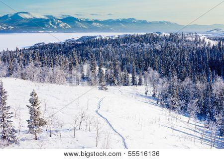 Snowshoe Taiga Trail Landscape Yukon T Canada