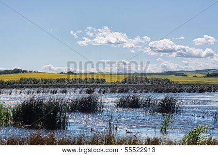 Marsh in the Alberta Prairies