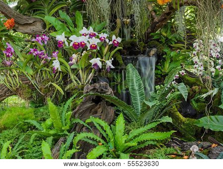 Decorated Orchid Garden
