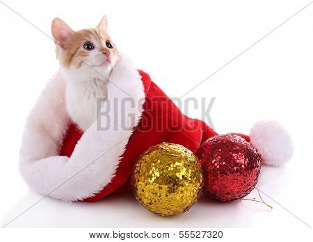 Little kitten in Christmas hat isolated on white