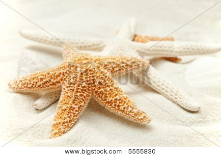 Soft Beach Sand With A Starfish