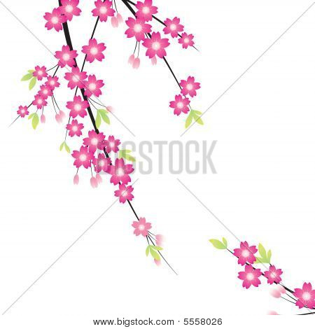 Floral Ornament - Sakura