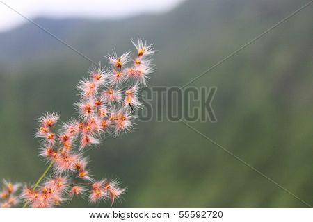 grass flower