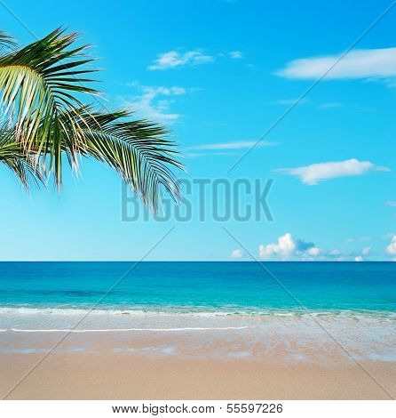 Golden Sand And Palm Tree