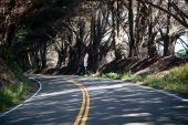 stock photo of mendocino  - A curving tree lined road in Mendocino County California - JPG
