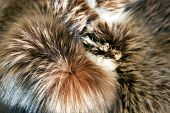 stock photo of lint  - Texture of the fur in the product