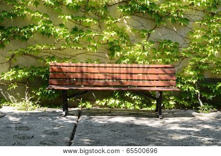 bench in green trees