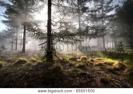Sunbeams In Morning Misty Forest