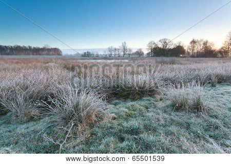 Cold Frosty Sunrise Over Swamp