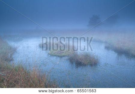 Swamp In Dense Morning Fog