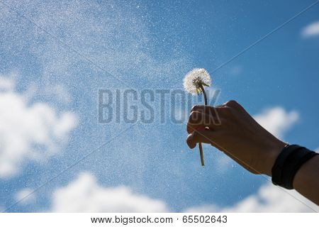 hand holds blowball flower up into the sky with soft clouds