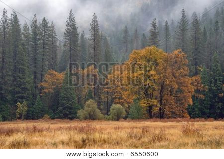Lonely Oak In Rainy Meadow
