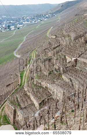 vineyards on Moselle river, early spring