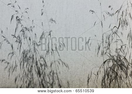 Shadow Of Grasses On Canvas Outdoor