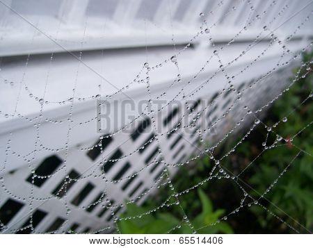 Spiderweb in the Rain