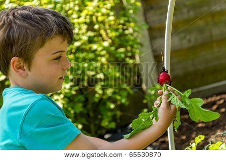 Kid Harvesting Radish