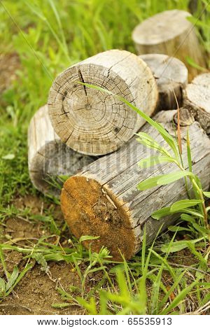 Firewood on green grass
