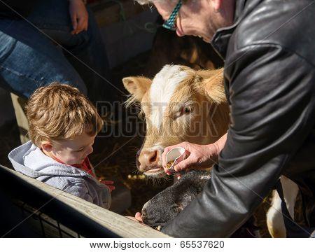 Boy Feeding Animals