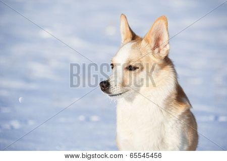 Portrait Dog.