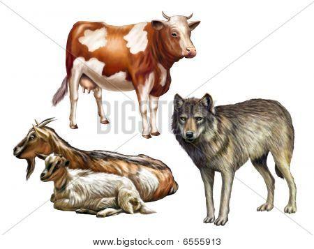 Tierwelt II
