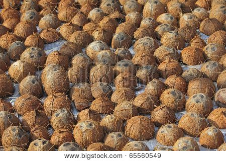 Pile Of Discarded Coconut