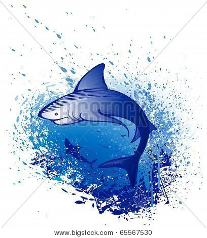 Emerges White Shark