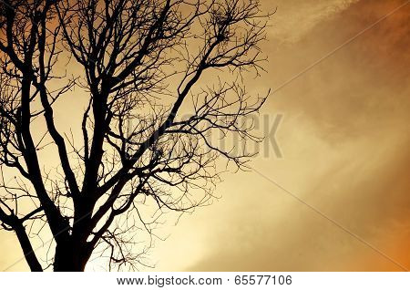 Silhouette Of Dead Tree Without Leave