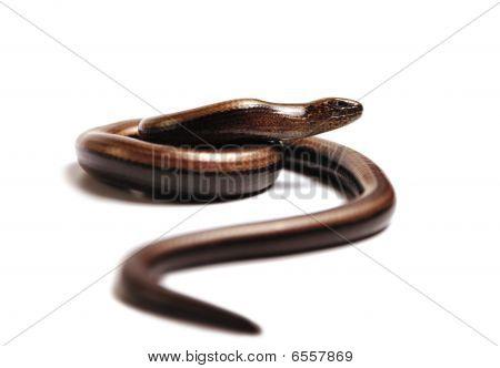 Snake on the hunt