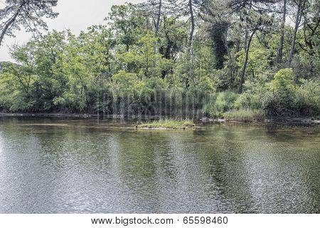 Plants On The Lagoon
