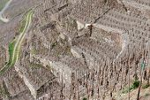image of moselle  - Riesling vineyards on Moselle river - JPG