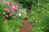 stock photo of english cottage garden  - Pretty path in an english cottage garden - JPG