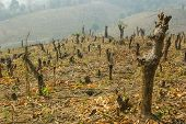 picture of slash  - Slash And Burn Cultivation - JPG