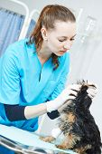 pic of veterinary surgery  - Female veterinarian surgeon worker treating Dalmatian dog in veterinary surgery clinic - JPG