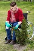 picture of spayed  - Disabled man working in a garden vertical - JPG