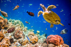 pic of under sea  - Turtle  - JPG