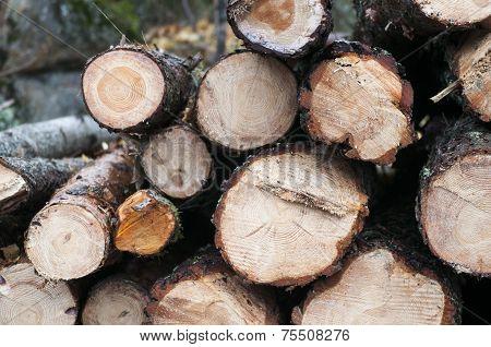 Timber Log Stack