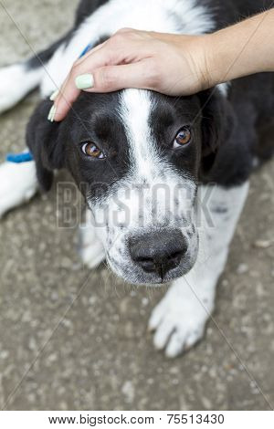 Female Hand Patting Dog Head